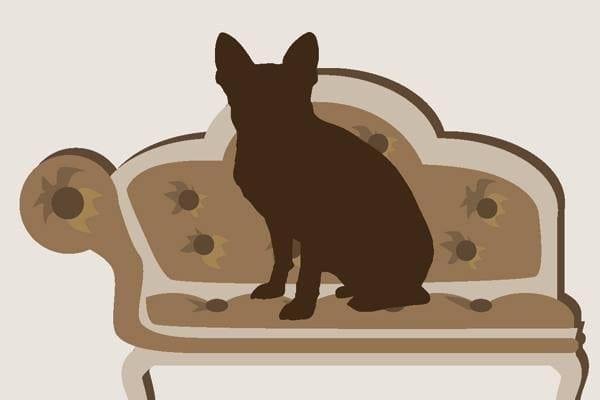 Kysy koirakouluttajalta: Vuoden 2013 kaikki kysymykset ja vastaukset