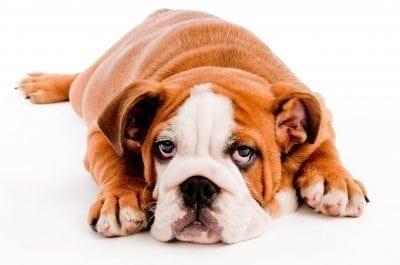 Kysy eläinlääkäriltä: Koiraa närästää?