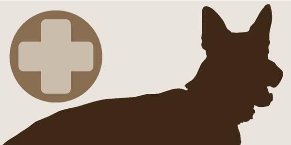 Kysy eläinlääkäriltä: Syyliä kuonossa ja huulissa