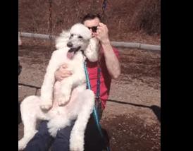 Maailman tarpeettomin koiravideo? Katso puudelia keinumassa!