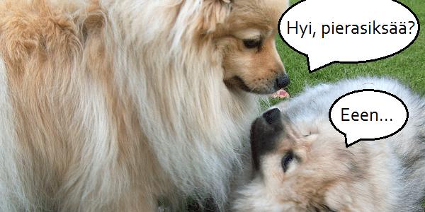Onko koirallasi taipumusta piereskelyyn? Vältä näitä ruokia!