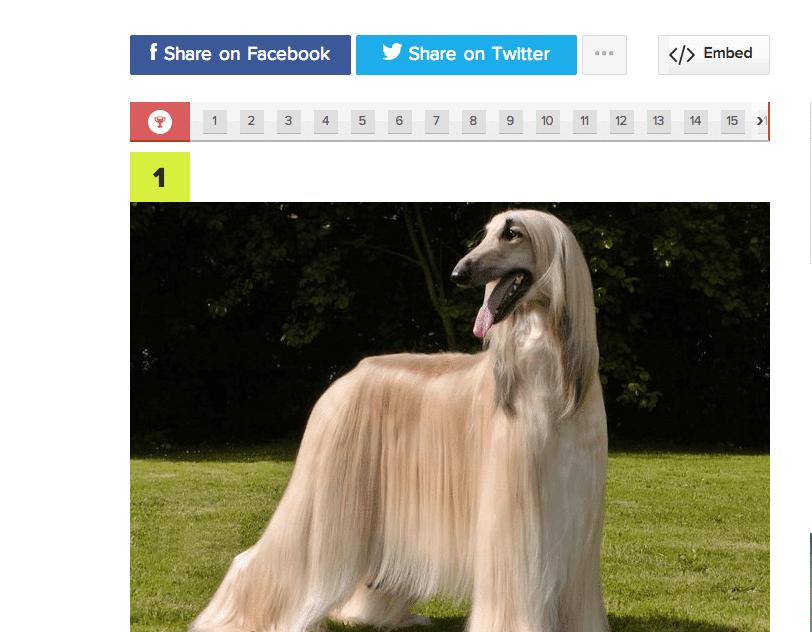 Tunnetko kaikki koirarodut? Tee hauska testi!