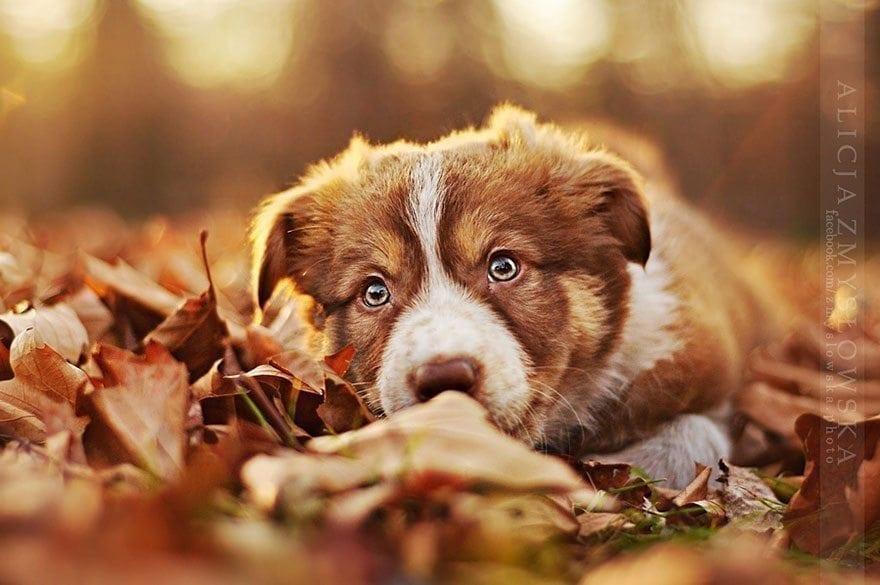 Puolalaisvalokuvaaja kuvaa ihastuttavan upeita ja hellyttäviä koirakuvia!
