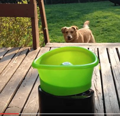 Nerokas laite: Koira heittää itselleen palloa!