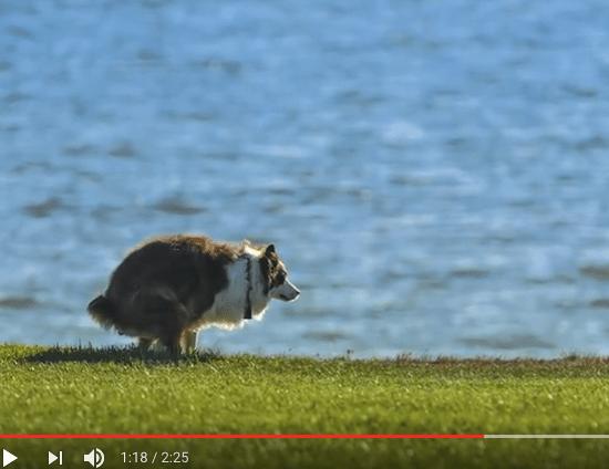 Tutkimus: koira kakkaa Maan magneettikentän mukaisesti!