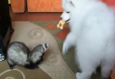 Fretti varasti lelun koiranpennulta –tuulennopeaa toimintaa!