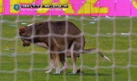 P*ska peli: koira ulosti maalin eteen kesken jalkapallo-ottelun