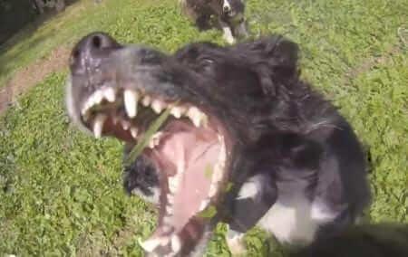 Ihana kesä! Koirat ottivat vesiletkusta kaiken irti!