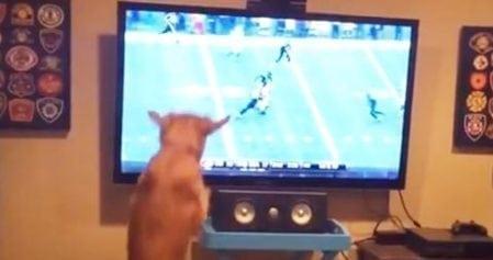 Upeaa, telkkarista tulee jenkkifutista! Tämä koira on innokas penkkiurheilija!