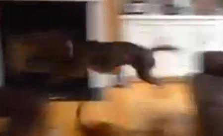Jump around! Koira hyppi sohvalta toiselle!