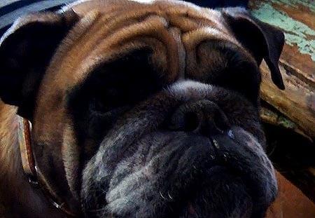 Ei haukku haavaa tee, mutta tätä koiraa ei nimitellä! Hauska video!
