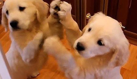 Terve, kaveri! Pentu yrittää leikkiä peilikuvansa kanssa