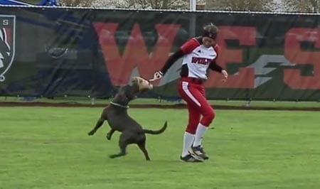 Koira kirmasi kentälle ja varasti pesisräpylän –hulvaton video!