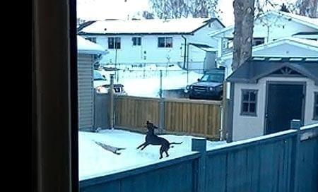 Koirien touhuja, osa x: nämä koirat haluavat kepin, vaikka sitten puusta