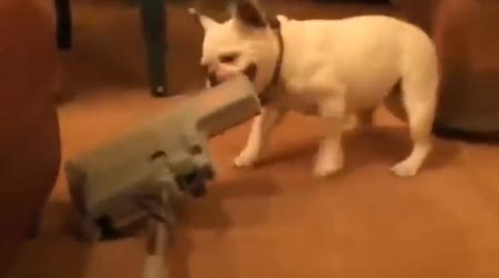 Koirat kouluttavat pölynimureita –viisi minuuttia valloittavaa videoviihdettä!