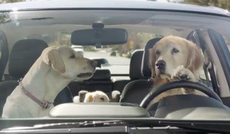 Koirat ajavat autoa – katso hillittömät mainokset!