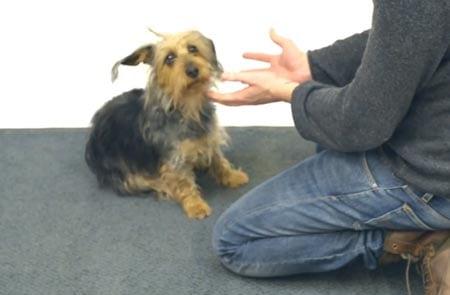 Tästä kaikki alkoi: kotimaisen koirataikurin ensivideolla jo miltei 20 miljoonaa katselua