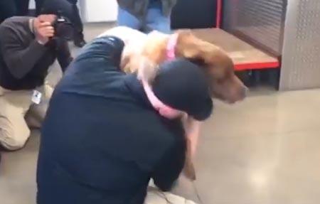 Sotilas ja koira tapasivat jälleen – ilmassa riemua ja liikutusta!
