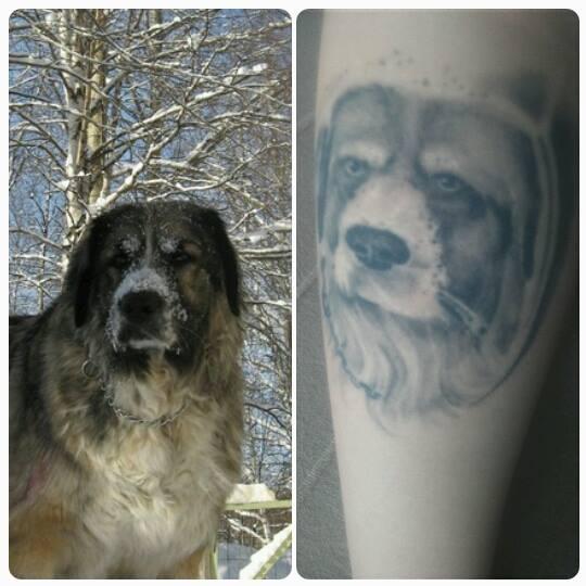 """Jenna Katariina. Kaukasiankoira """"Aida"""", elämäni koira. Tatuointi: Jari Partanen"""