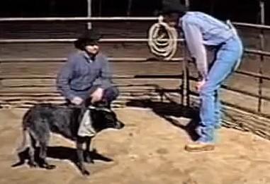 Koira näyttää ymmärtävän puhetta – kiehtova video!