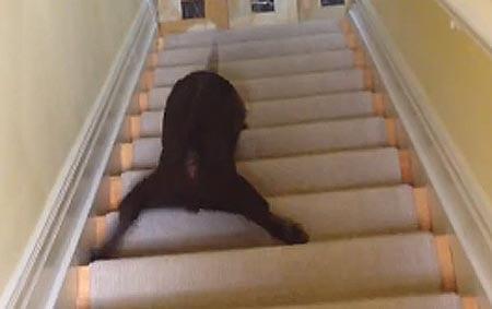 Pentu päätti liukua portaat alas – katso hillitön video!