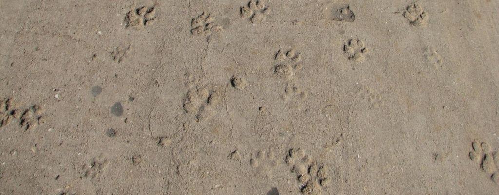 Taltuta ekologinen tassunjälki – vinkit ympäristöystävällisempään koiran omistamiseen