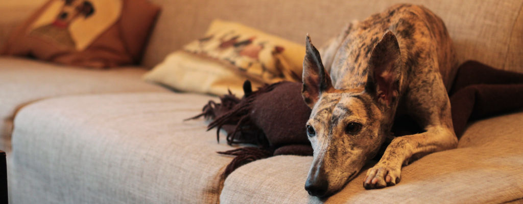 Tappotarhalta sohvaperunaksi – kertomus onnekkaasta galgosta