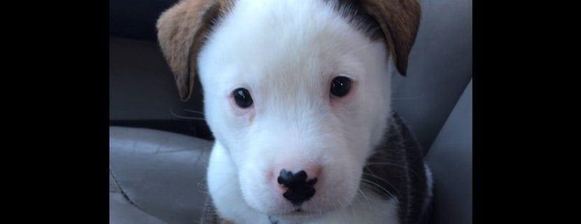 Koiranpentu yrittää säikäyttää hikkansa pois haukkumalla – Katso suloinen video!