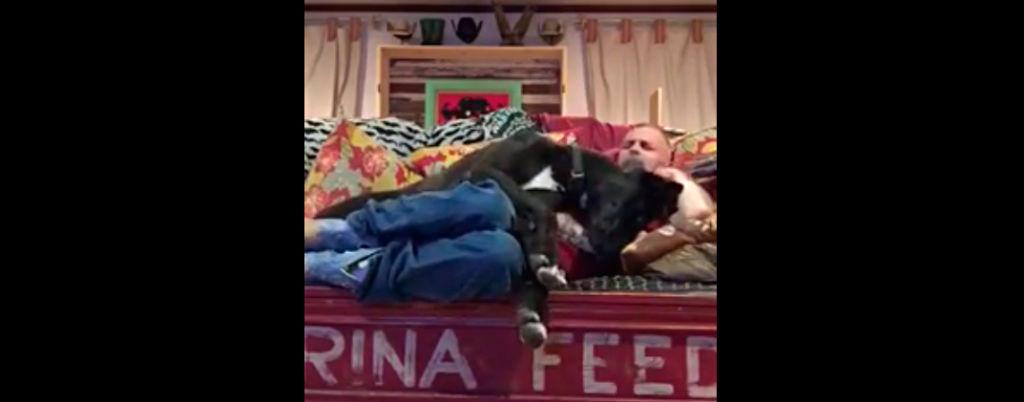 Tanskandoggi tahtoo huomiota – Katso hauska video!