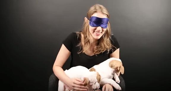 Hellyttävä video näyttää, miten koirakammoiset ihmiset reagoivat pitbullin pentuihin