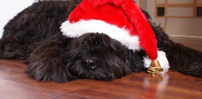 Vastaa Kuonon koirien joululahjakyselyyn ja osallistu arvontaan!