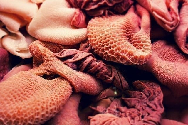 Raakaruokatutkimus Ruotsissa: Kolibakteeria kaikissa ruokanäytteissä, myös suomalaisvalmisteissa tuotteissa