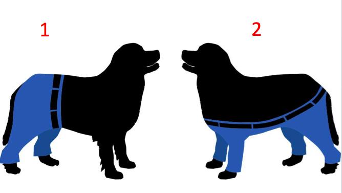 Yli 1 000 suomalaista kertoi mielipiteensä: Jos koiralla olisi housut, ne olisivat tällaiset
