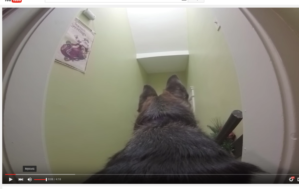 Koiraan kiinnitettiin kamera – ja jätettiin yksin kotiin