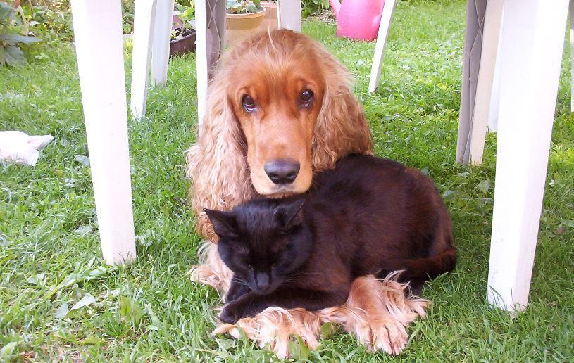 Koira ja kissa laitettiin samalle viivalle – pilkkopimeässä labyrintissa