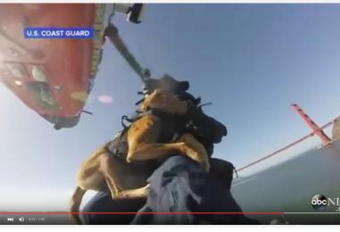 Nyt eivät seikkailut enää hurjemmiksi muutu: räjähdekoirat viimeistelivät koulutuksensa helikopterissa