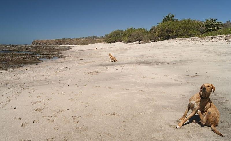 Ainutlaatuinen hylättyjen koirien hoitola Costa Ricassa – auringon alla luonnon helmassa