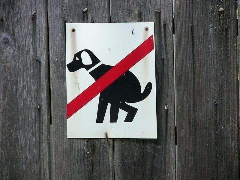Tämän vuoksi koirasi tuijottaa sinua kakatessaan