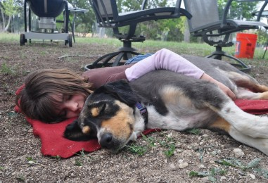 Halaaminen ei ole paras tapa osoittaa hellyyttä koirallesi