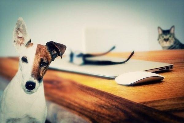 Kerätään kaikki Suomen koirien nimet jälleen yhteen – Tule mukaan talkoisiin ja voita koiranruokaa!