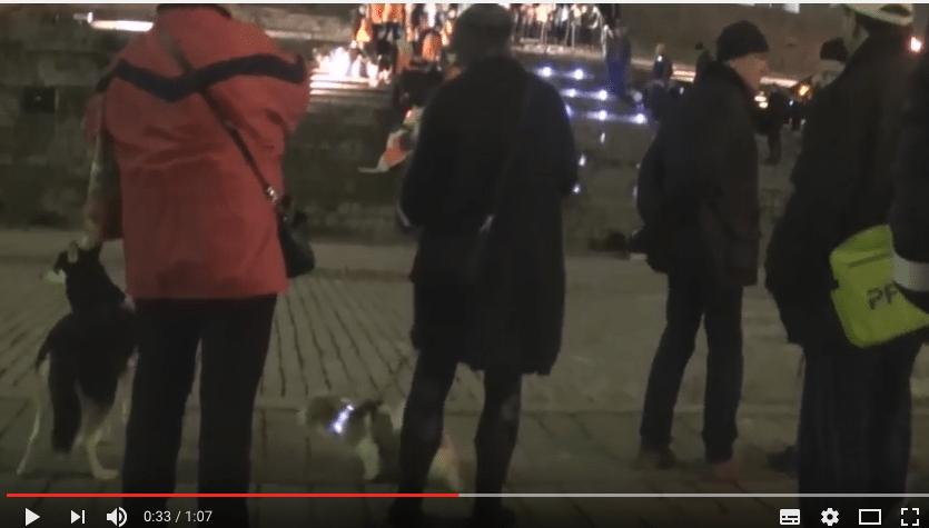 Koirat saapuivat Senaatintorille – siunattaviksi