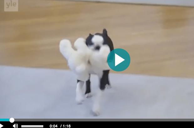 Presidenttiparin Lennu-koira haistoi joulukinkun –katso hauska video!