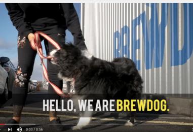 Olutpanimo myöntää vanhempainvapaata koiranpennun hankkijoille – koska Suomeen?