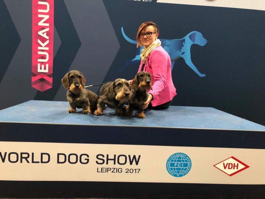 Tällainen on maailman suurin koiranäyttely!