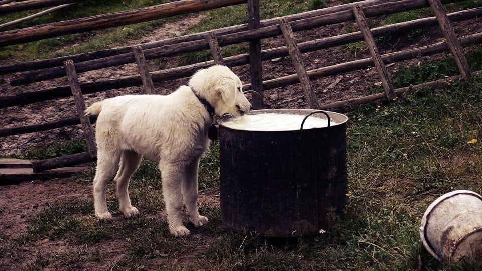 Tiedätkö, mistä koiranruokasi oikeasti tulee?