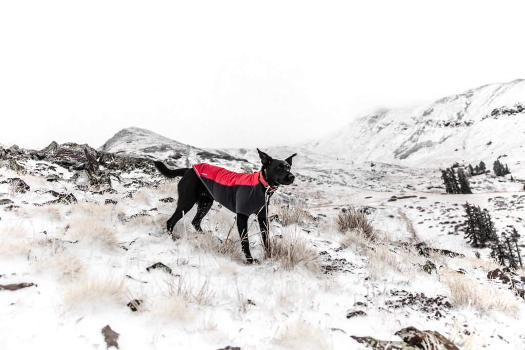 Lämpömittari painuu miinukselle – Tarvitseeko koirani talvitakin?