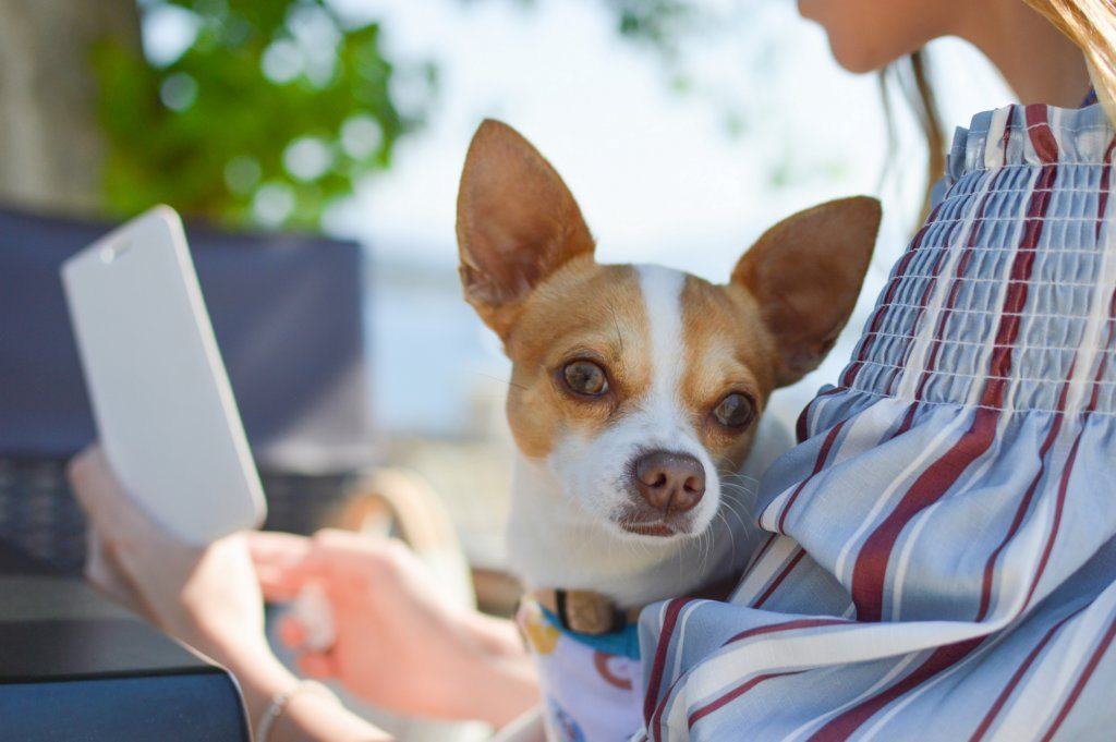 Joko testasit nämä? – 7 kiinnostavinta mobiilisovellusta koiranomistajalle