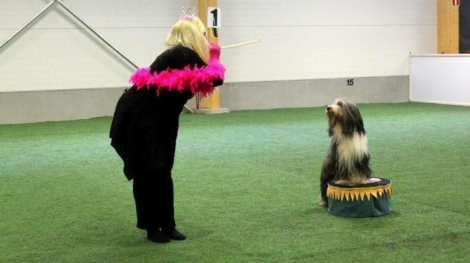 Heittäydy koiratanssin vietäväksi – Omistajan ja koiran yhteys vahvistuu tanssin tahdissa
