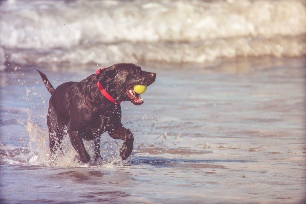 Koiranlelubrändin edustaja kertoo: näin valitset koirallesi sopivan lelun