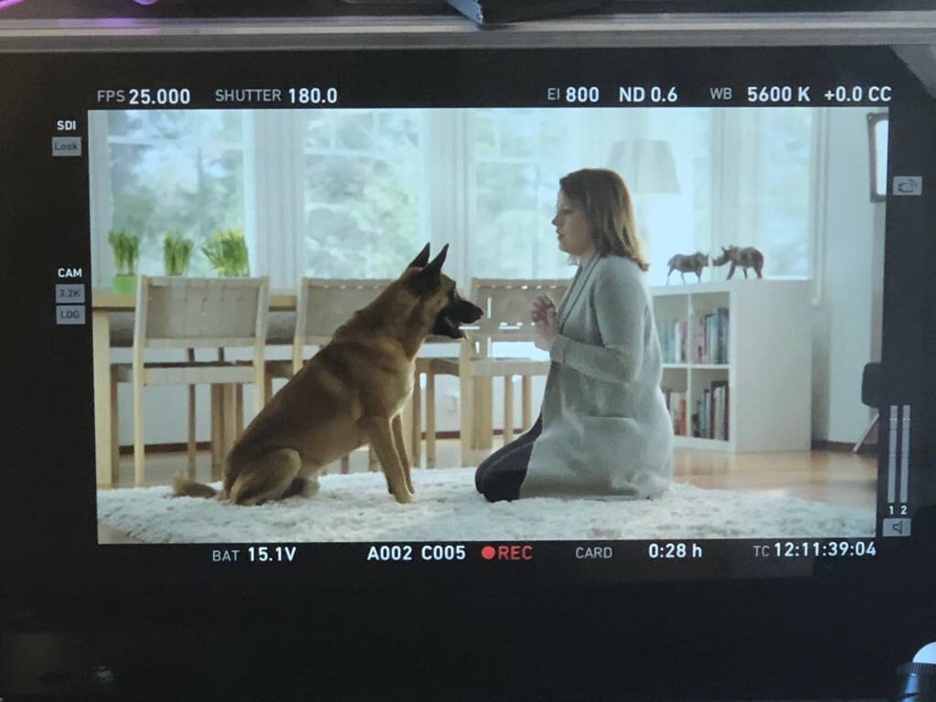 Koira tv-mainoksessa – ei mennyt ihan niin kuin Strömsössä!